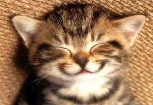 happy-cat_2818143